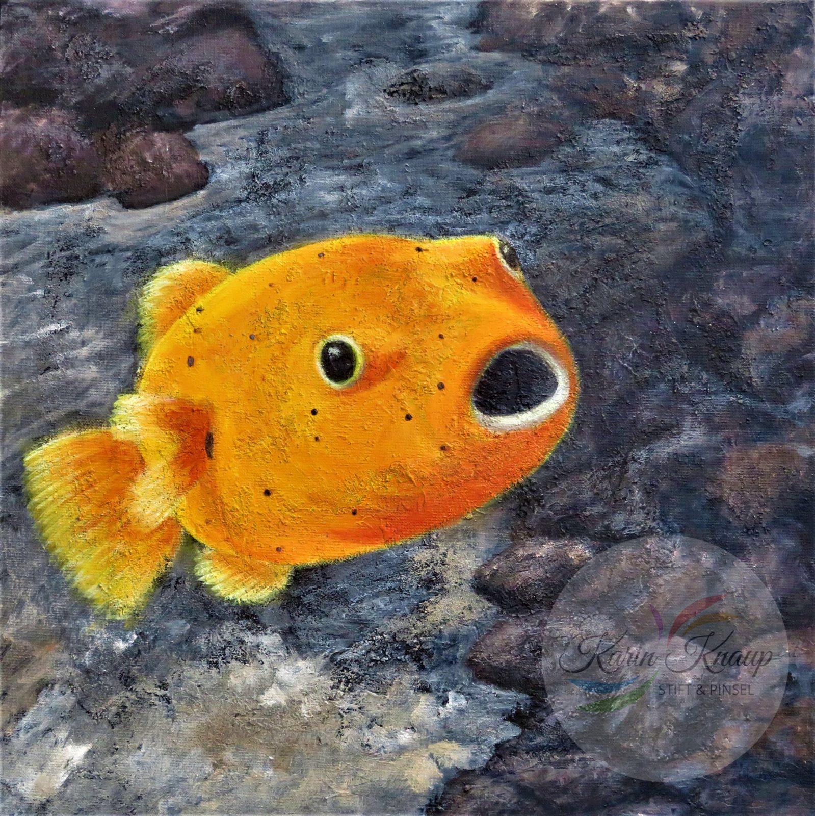 Kugelfisch - Acryl auf Leinwand 50 x 50cm
