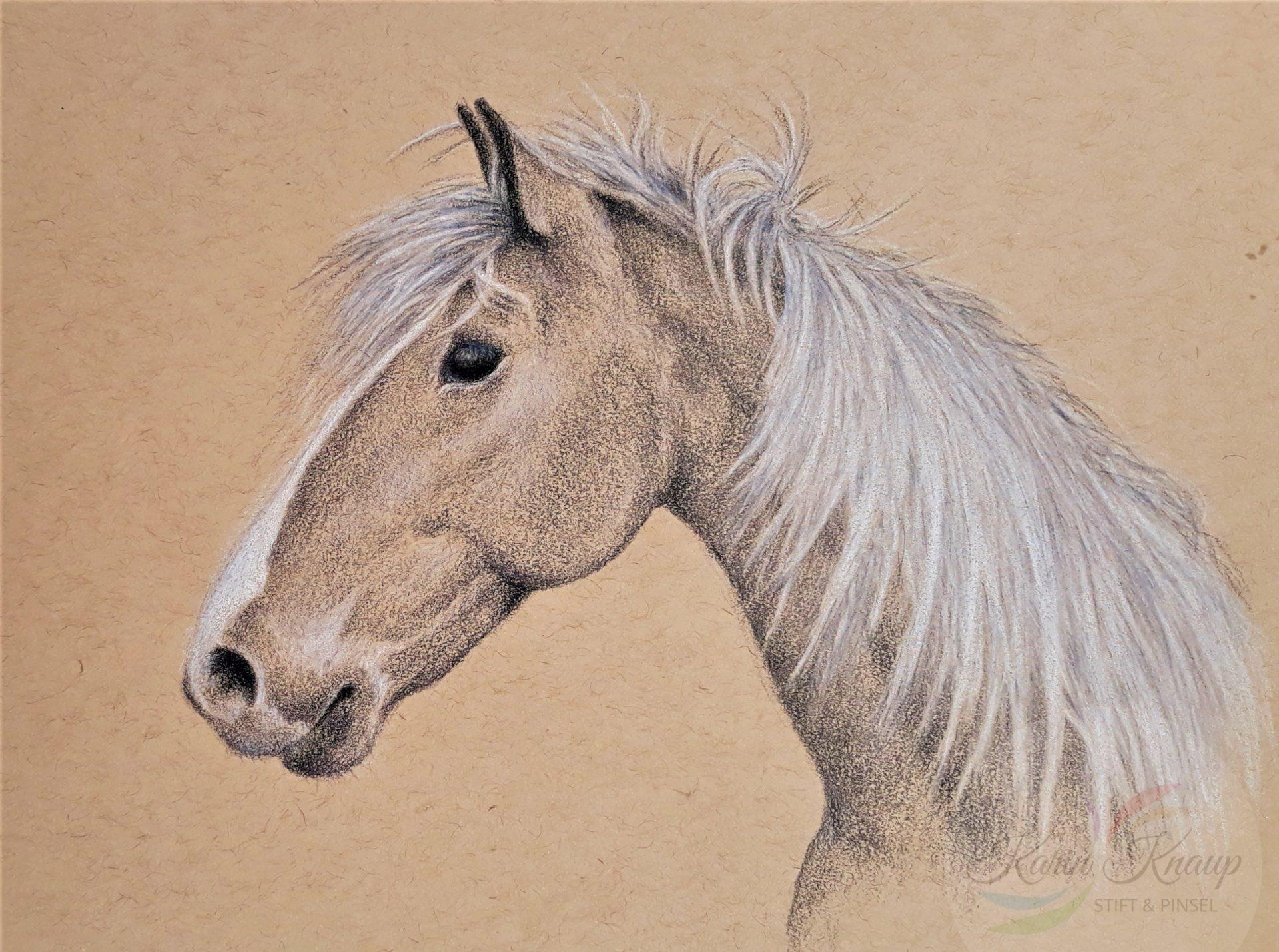 Pferdekopf - Farbstift auf Tonpapier